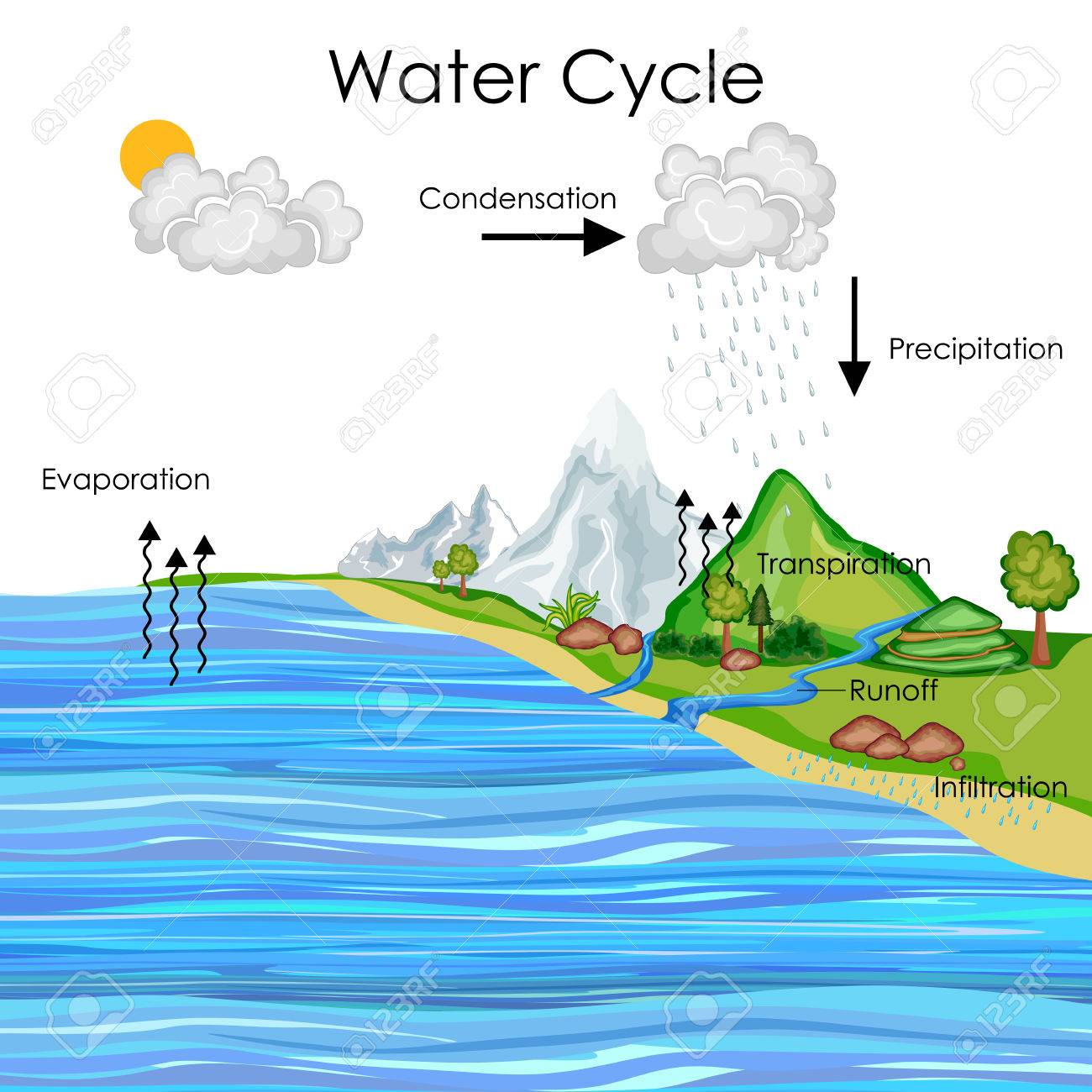 education chart of water cycle diagram stock photo, picture and Peacock Cycle Diagram education chart of water cycle diagram stock photo 80713896