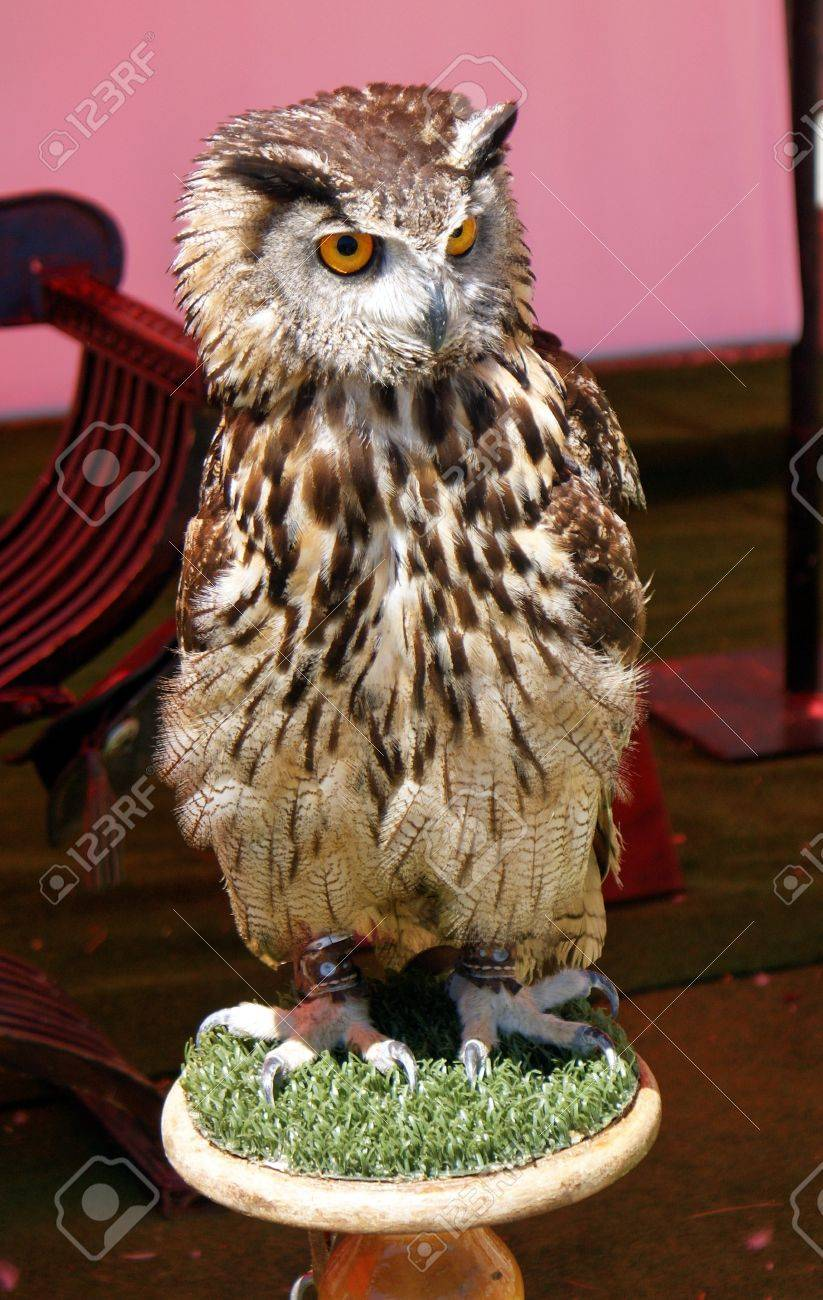 Falconry birds exposure Stock Photo - 22769194