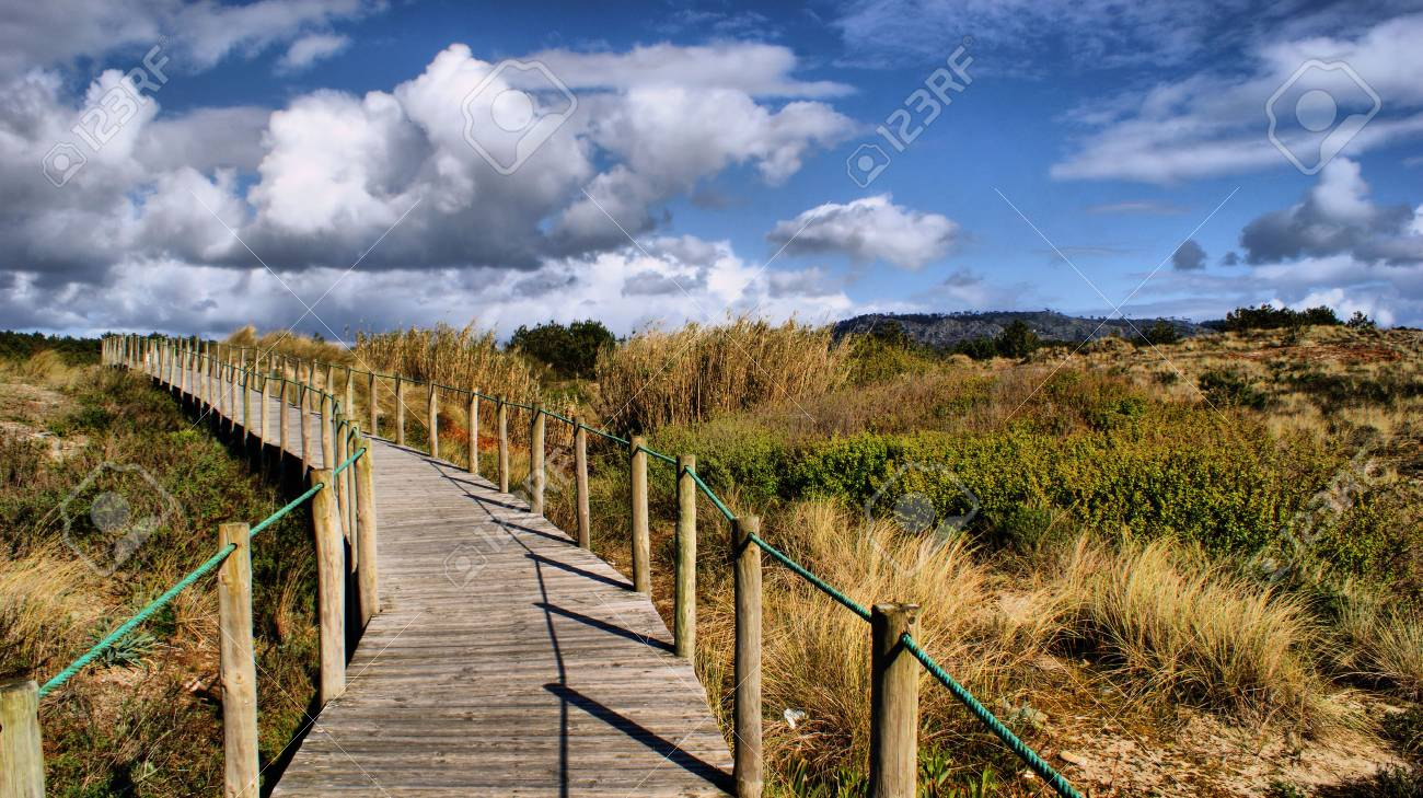 Paths on the beach in Portugal - 43625121