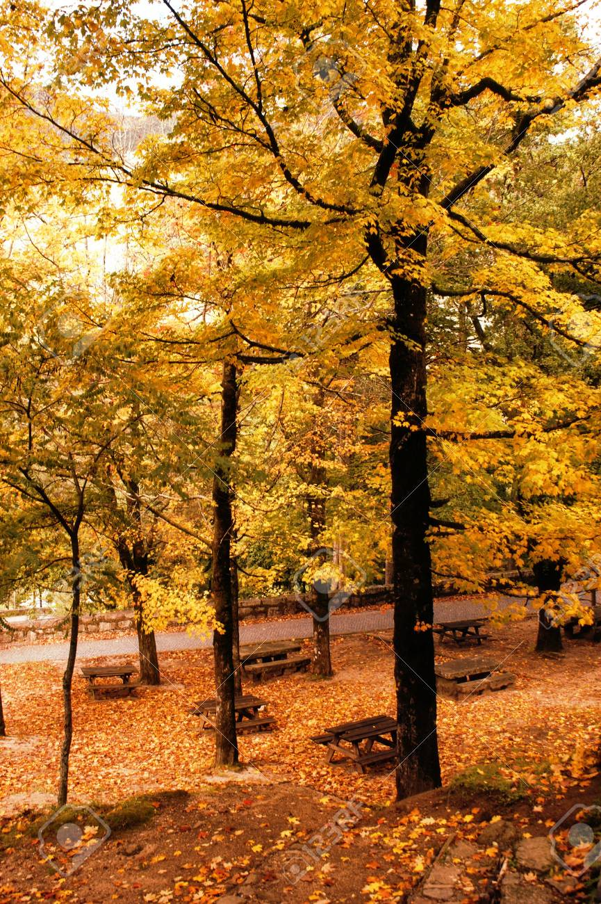 Autumn trees in the National Park of Geres, Portugal