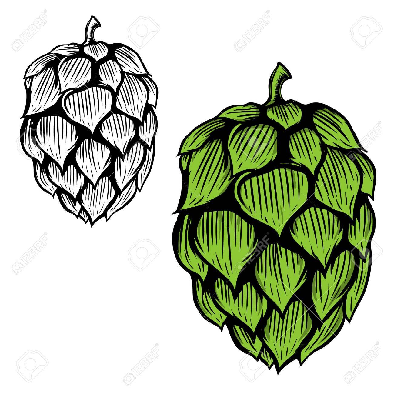 Beer hop illustration on white background. Design element for logo, label, emblem, sign. Vector illustration - 78077265