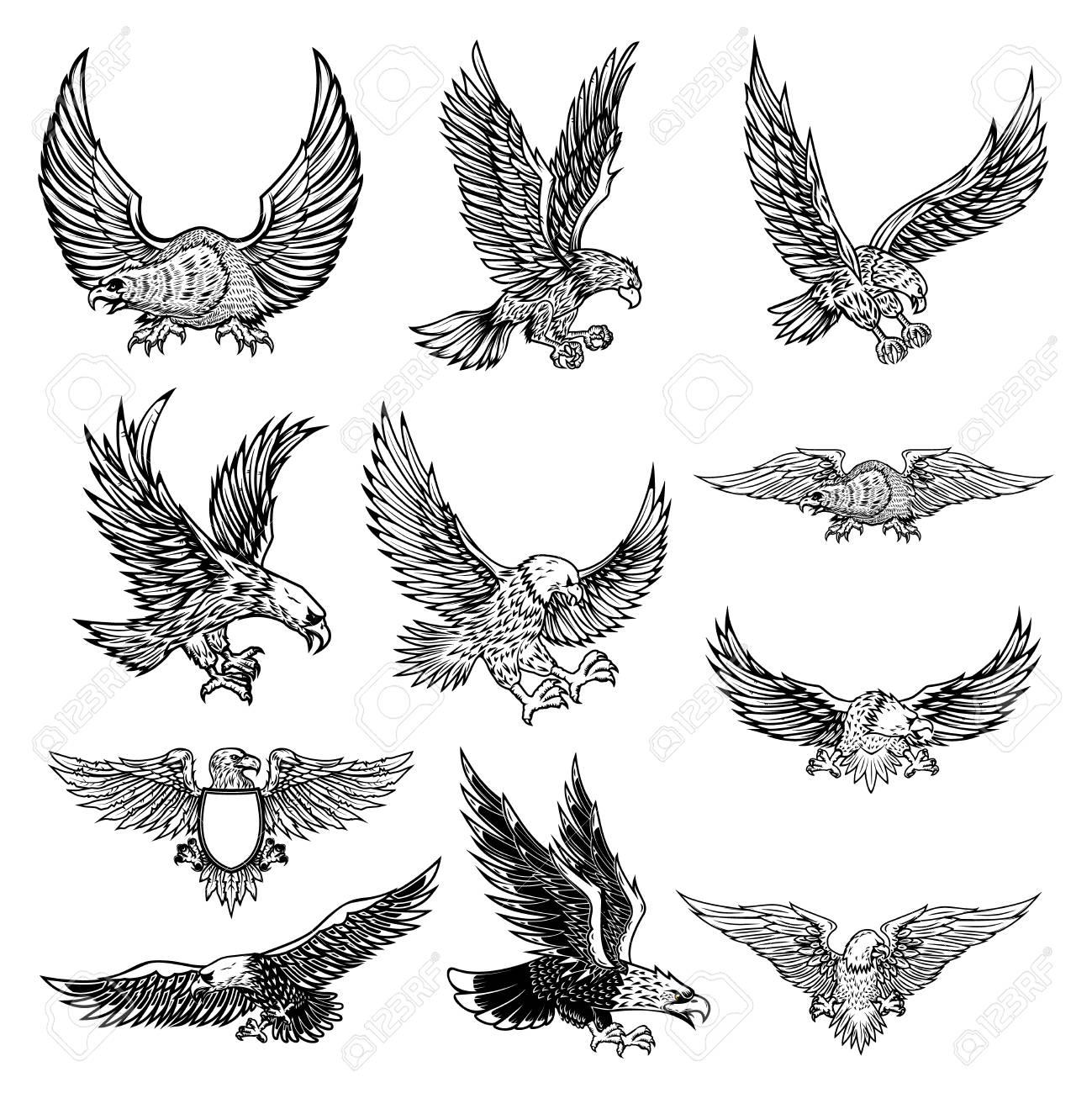Illustration of flying eagle isolated on white background. Vector illustration. - 110123135