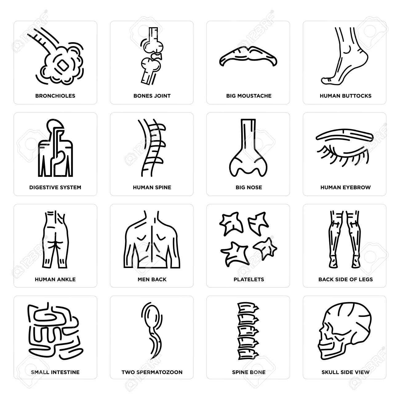 Set Of 16 Simple Editable Icons Such As Skull Side View Spine