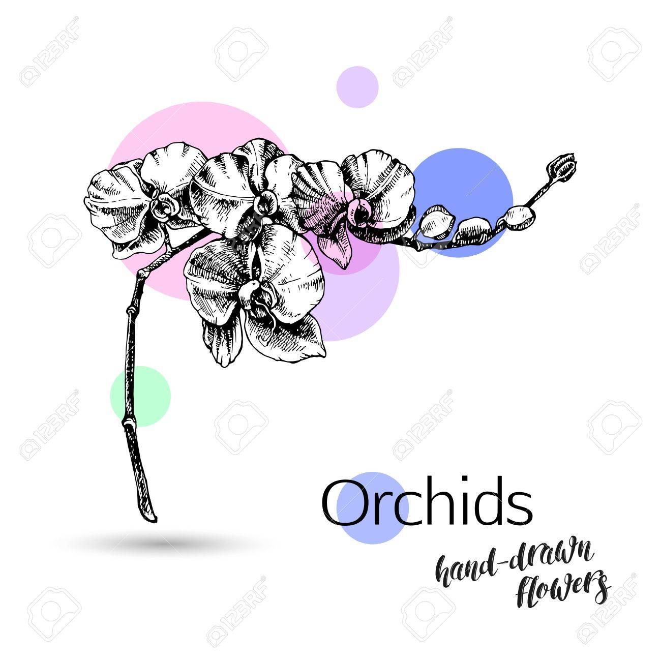 orchidées monochrome fleur isolé sur fond blanc pour le mariage ou