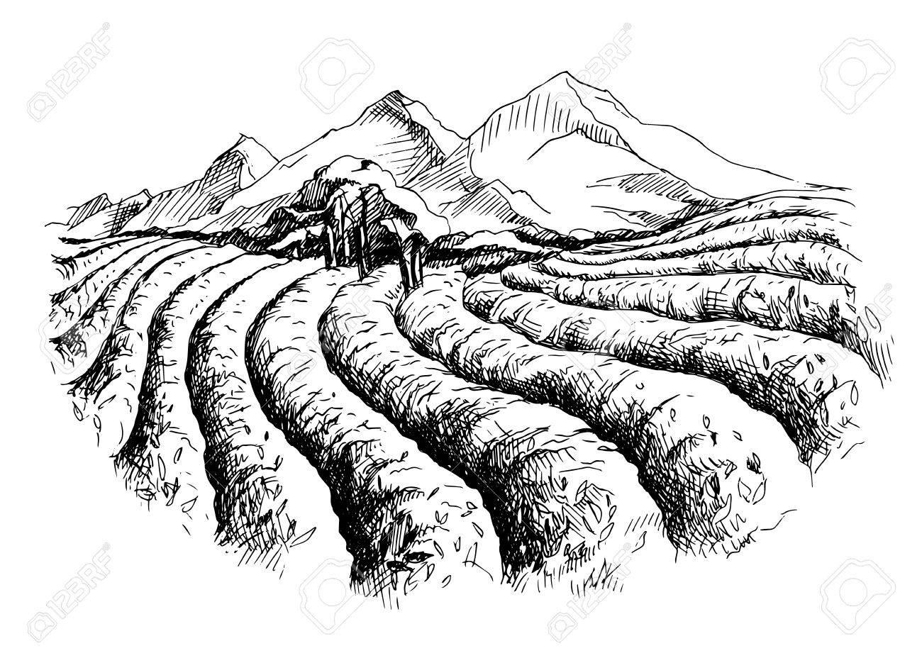 Tea plantation landscape in graphic style, hand-drawn vector illustration. - 73446544