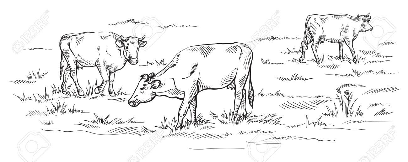 Vaches Se Patissant Sur La Prairie Dessin Dessine A La Main Clip