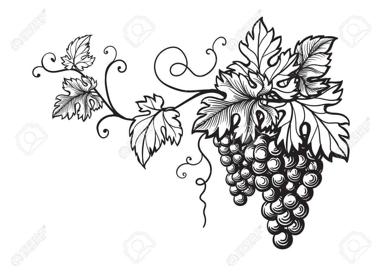 Set Of Grapes Monochrome Sketch. Hand Drawn Grape Bunches. Stock ...