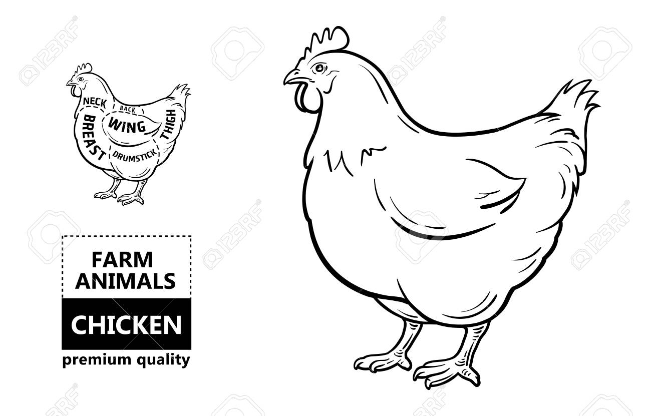 Chicken Diagram Back - Online Schematic Diagram •