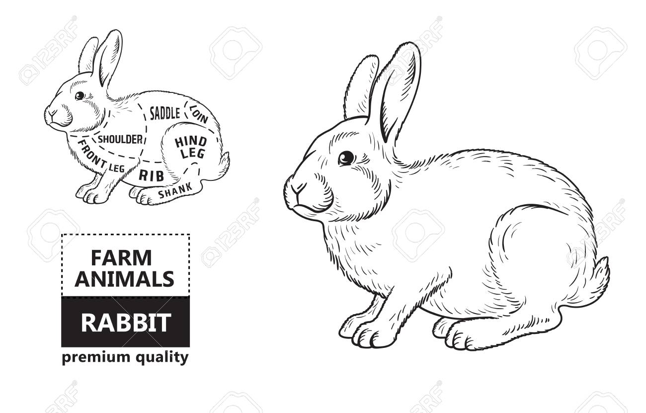 99185031 cut of rabbit poster butcher diagram cut of rabbit poster butcher diagram royalty free cliparts, vectors