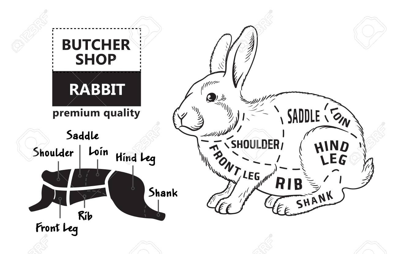 99055826 cut of rabbit poster butcher diagram for groceries meat stores butcher shop farmer market cut of rabbit poster butcher diagram for groceries, meat stores