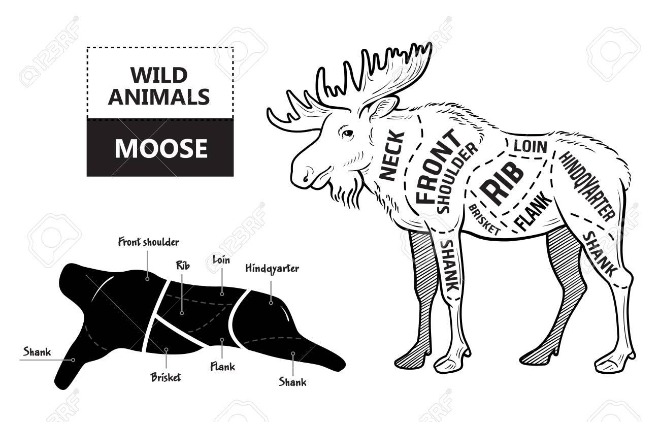 diagram of moose cuts wiring diagram Diagram Of Moose Cuts pin on hunting