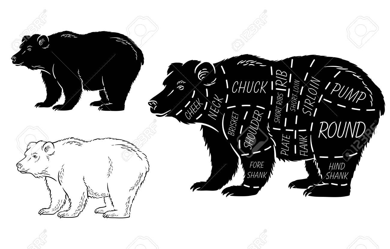 cut of bear set poster butcher diagram bear vintage typographic Simple Diagram of a Bear