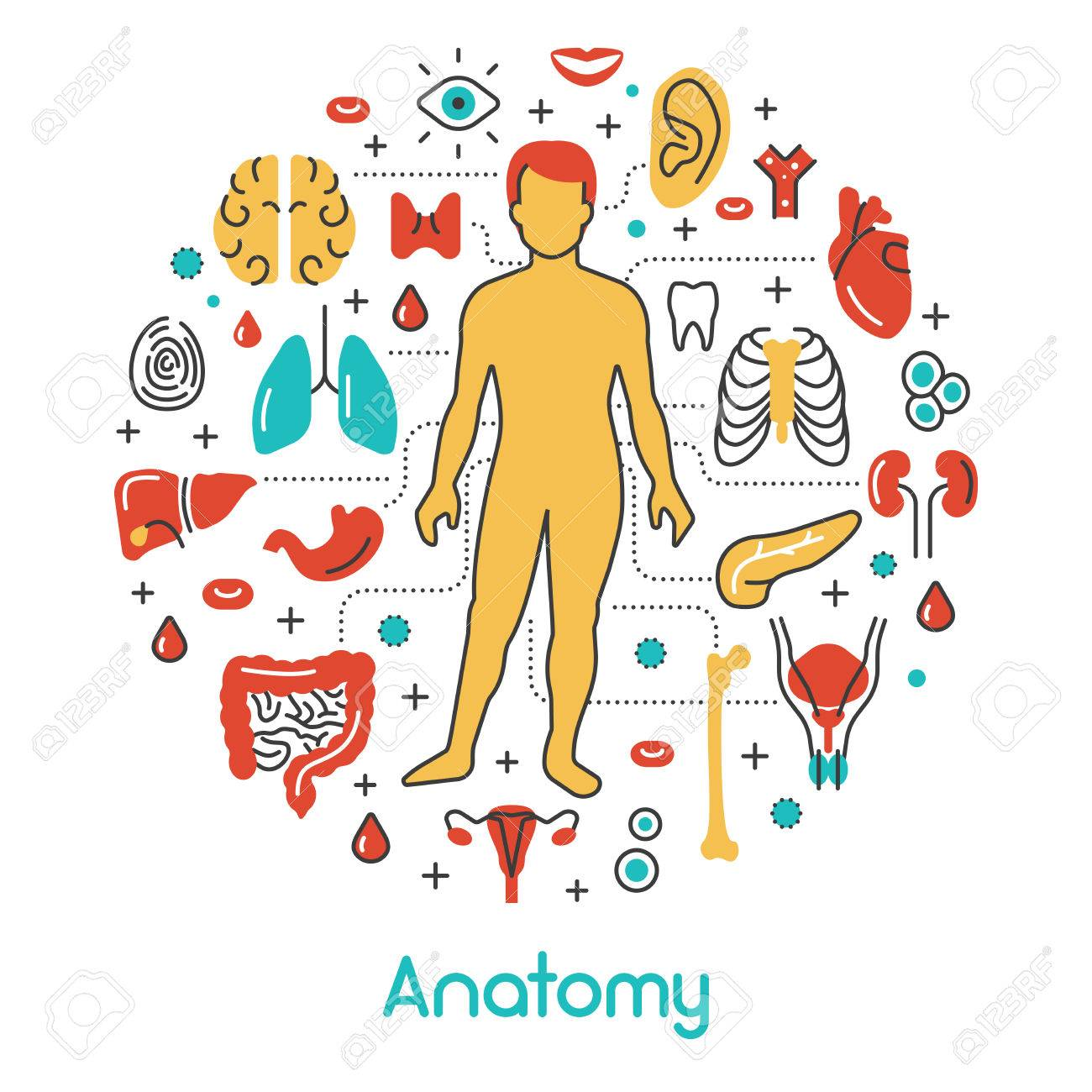 Lujoso Ver La Anatomía De Un Asesino En Línea Colección - Anatomía ...