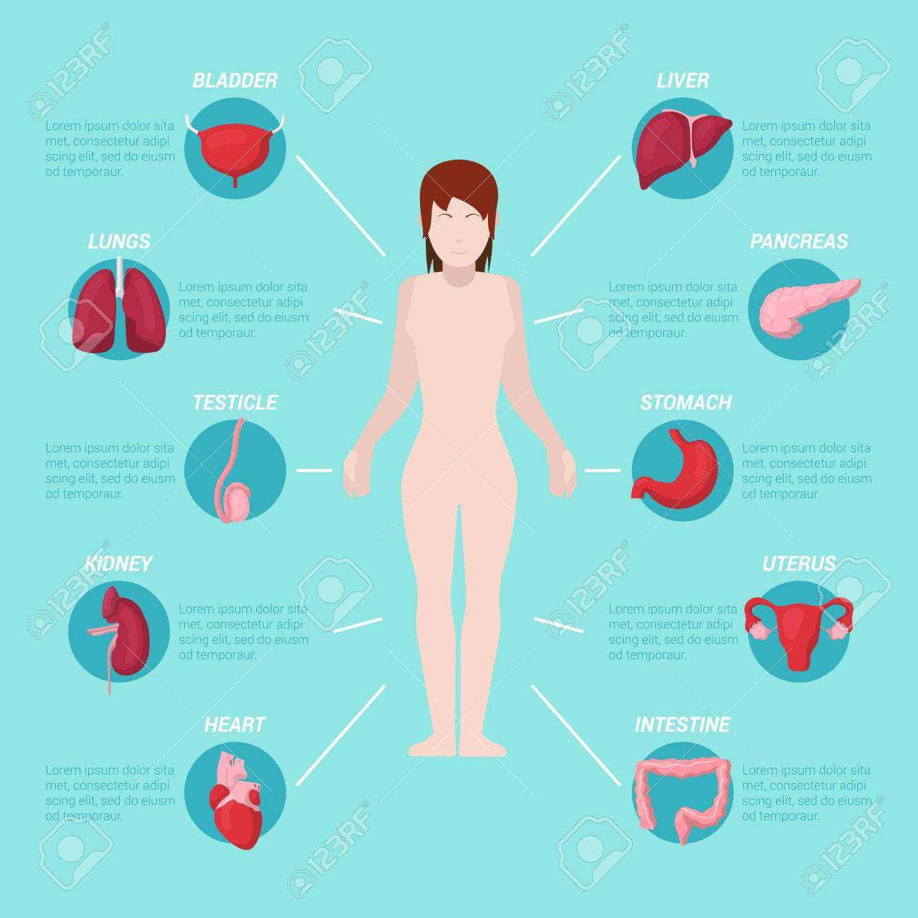 Human Body Anatomy Medical Scheme With Internal Organs. Vector ...