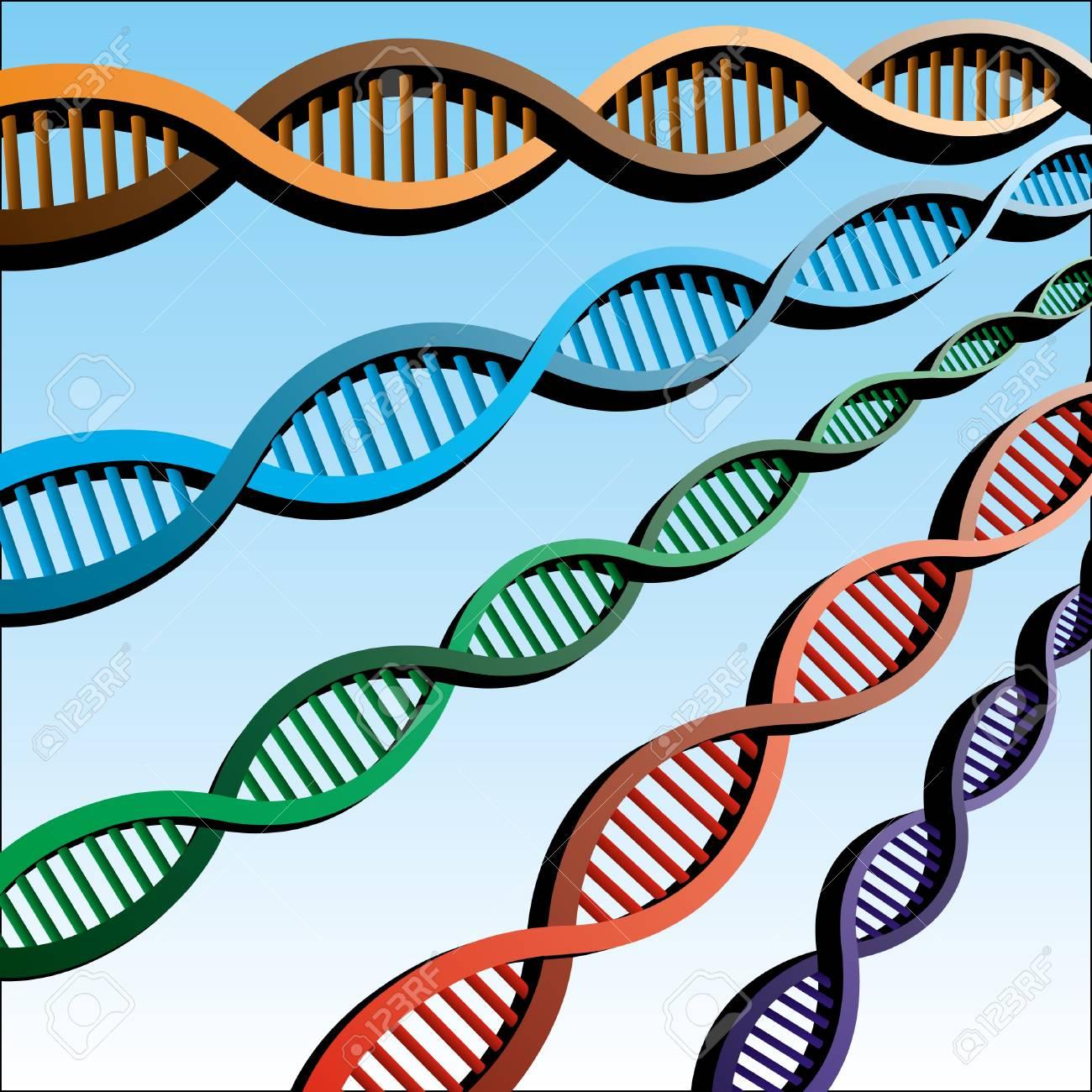 DNA Stock Vector - 13327051
