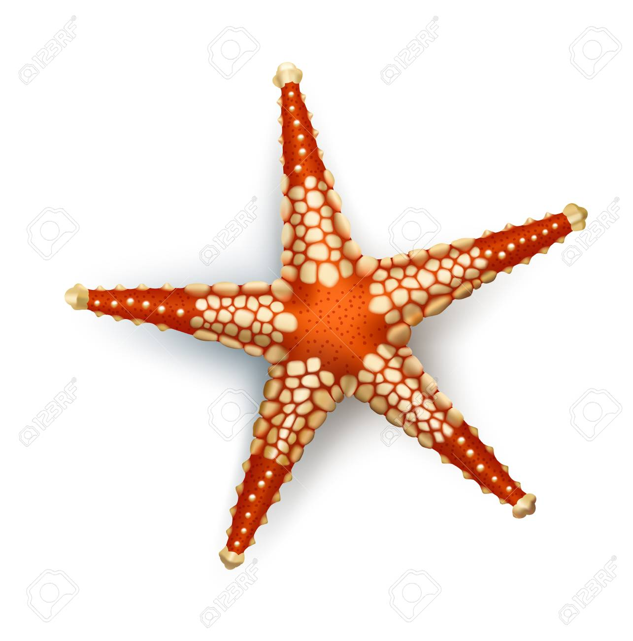 Vector Illustration Badges Stickers Starfish In Realistic