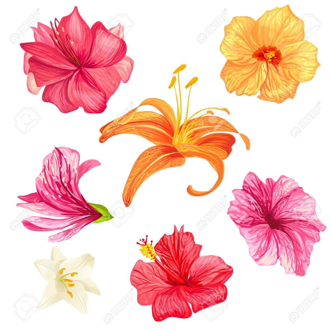 Set of vector illustrations of tropical hibiscus flowers and set of vector illustrations of tropical hibiscus flowers and lilies with pink red orange izmirmasajfo