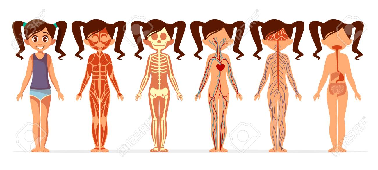 Girl body anatomy vector illustration cartoon medical female girl body anatomy vector illustration cartoon medical female human body structure of muscular skeletal ccuart Images
