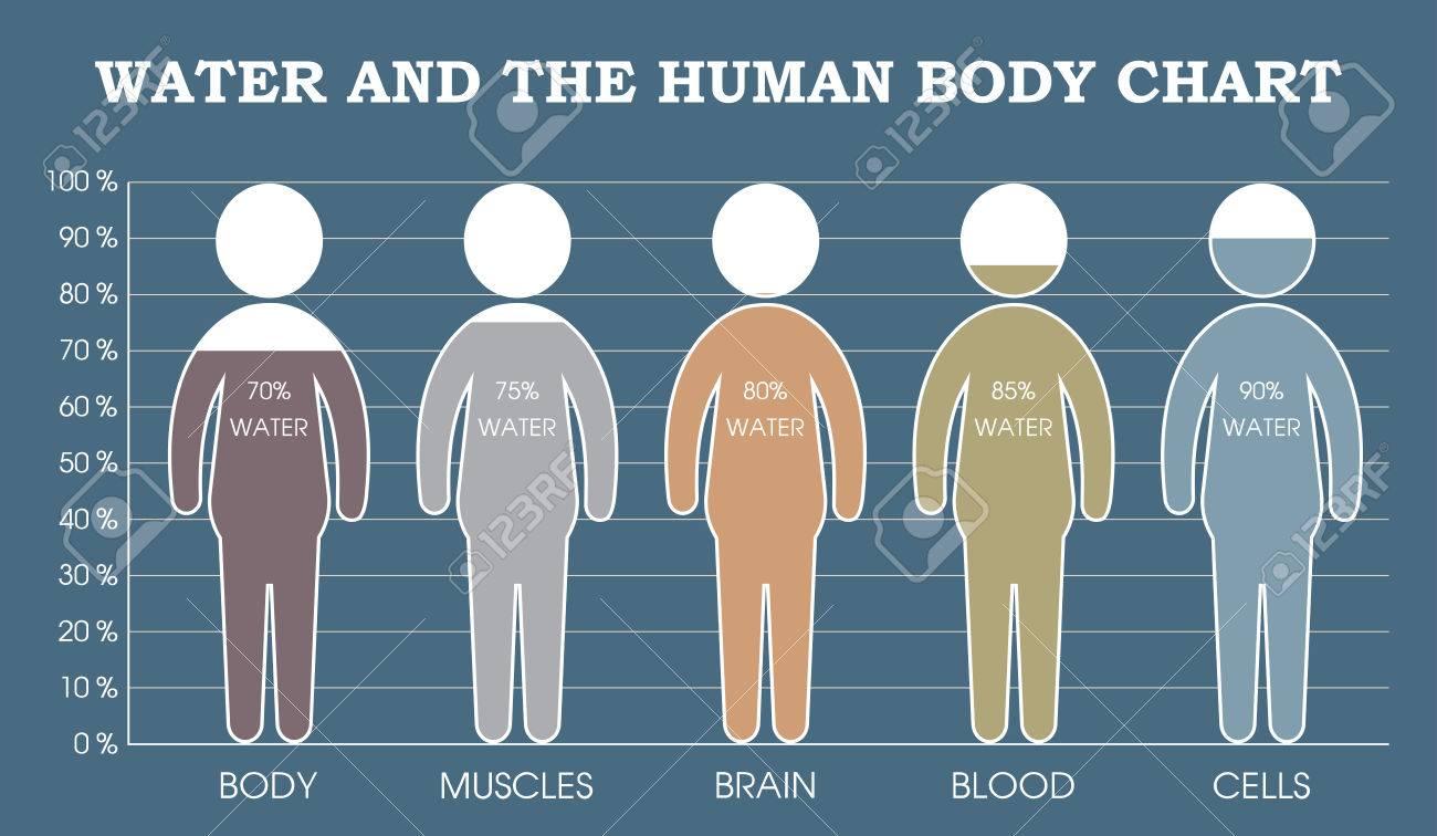Ziemlich Der Körper Diagramm Bilder - Menschliche Anatomie Bilder ...