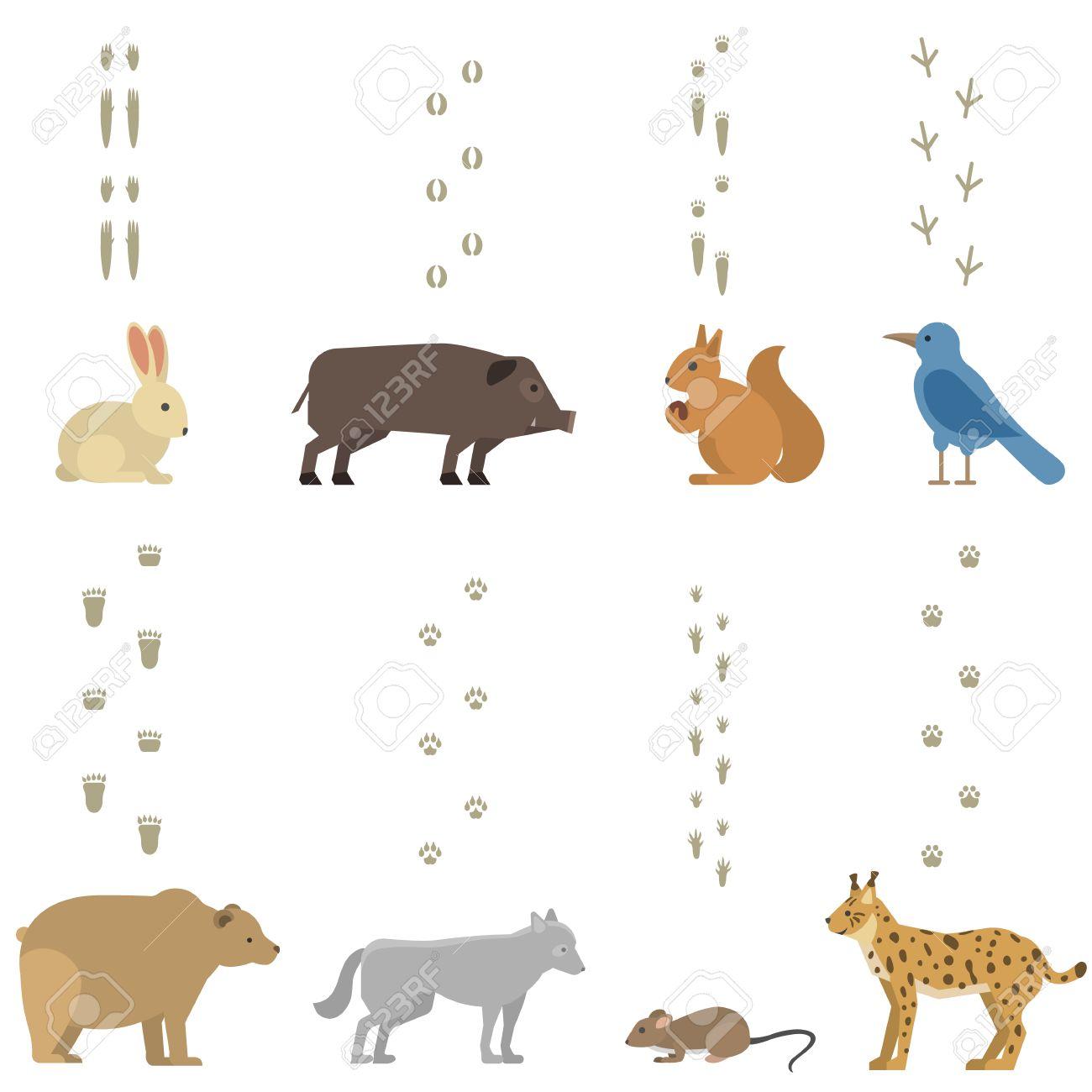 Gran Conjunto De Huellas De Animales Incluyen Mamíferos Y Aves ...