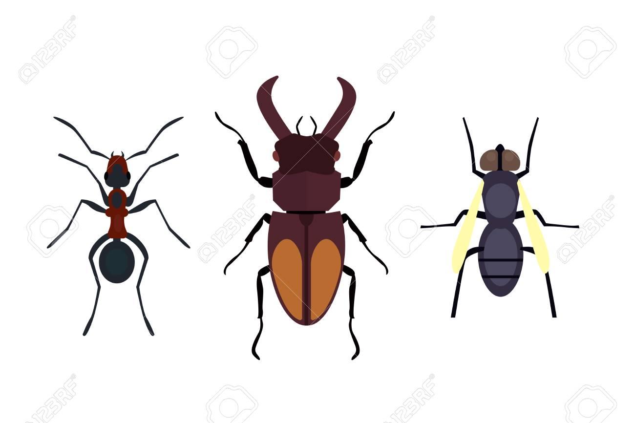lebende käfer kaufen