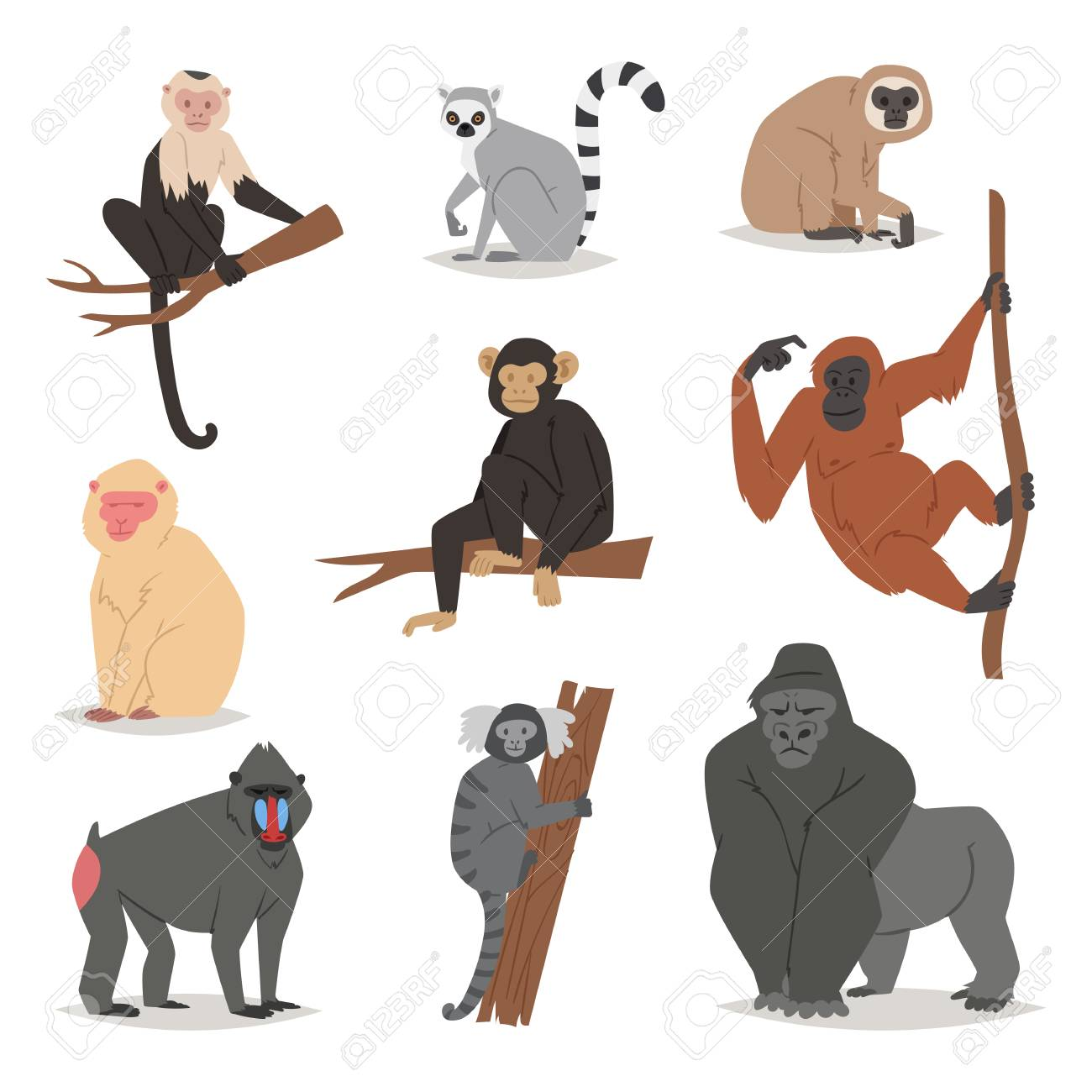 Monkey vector set cute animal macaque monkeyish cartoon character of primate chimpanzee, gibbon and babbon monkeyshines illustration isolated on white - 91176376