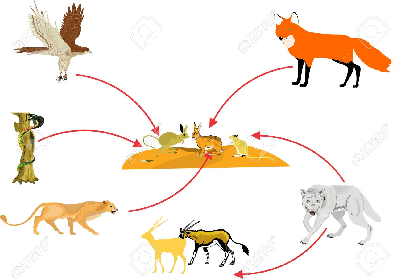 Food Chain In Desert Ecosystem Royalty Free Cliparts, Vectors, And ...