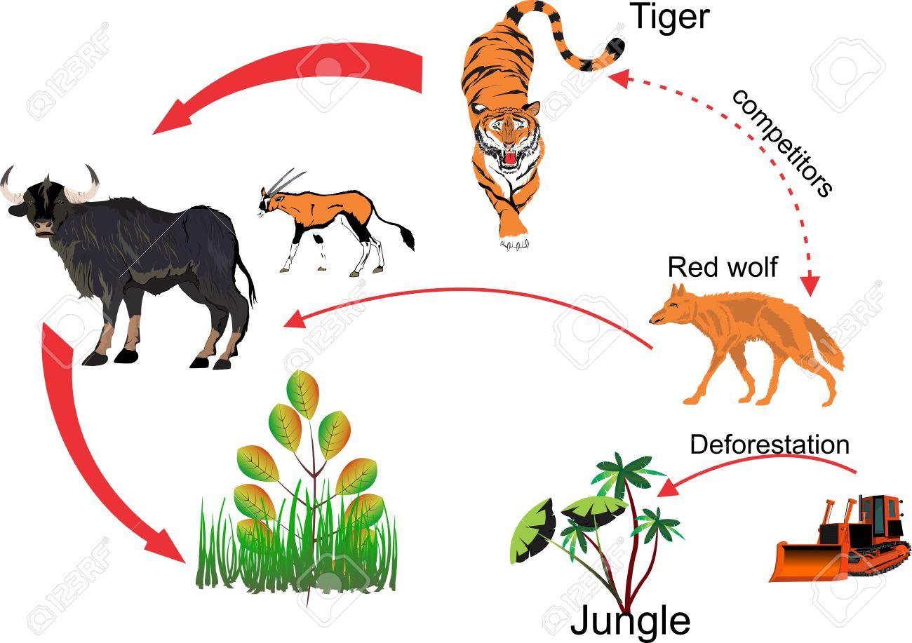 インドのジャングル食物連鎖生態系と人間の及ぼす影響 ロイヤリティ