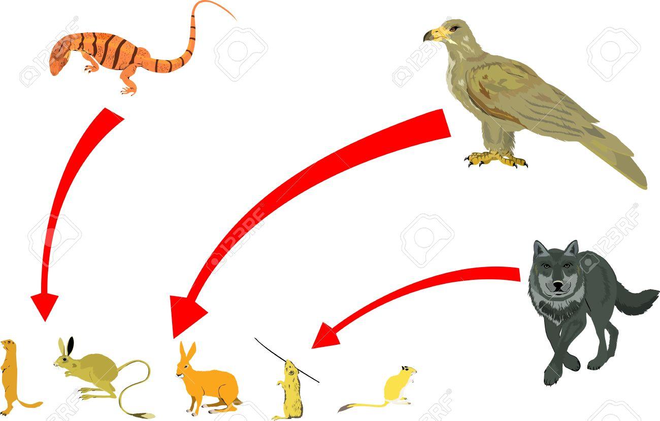 食物連鎖のベクトル図です。ワシ、狼、ヴァラヌスと齧歯動物