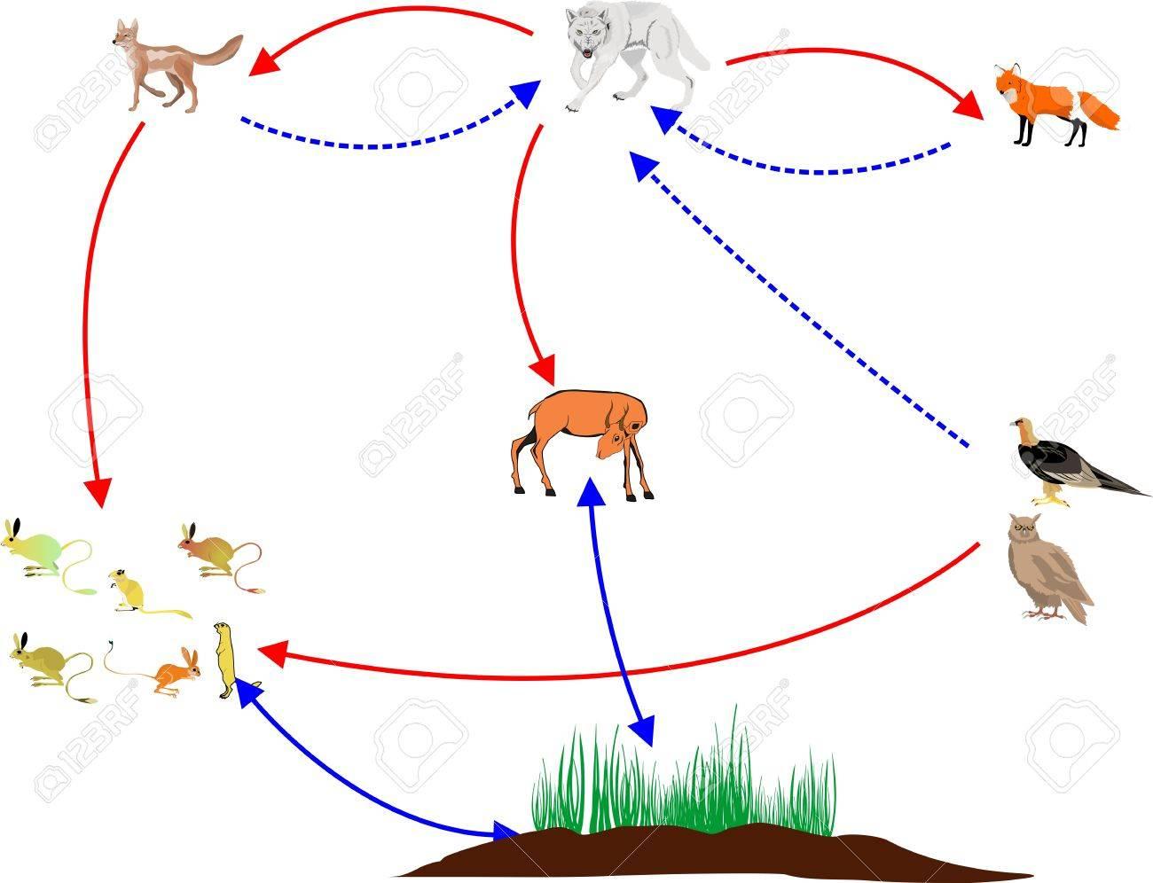 中央アジアの自然の生態系の野生動物を示す食物連鎖 ロイヤリティ