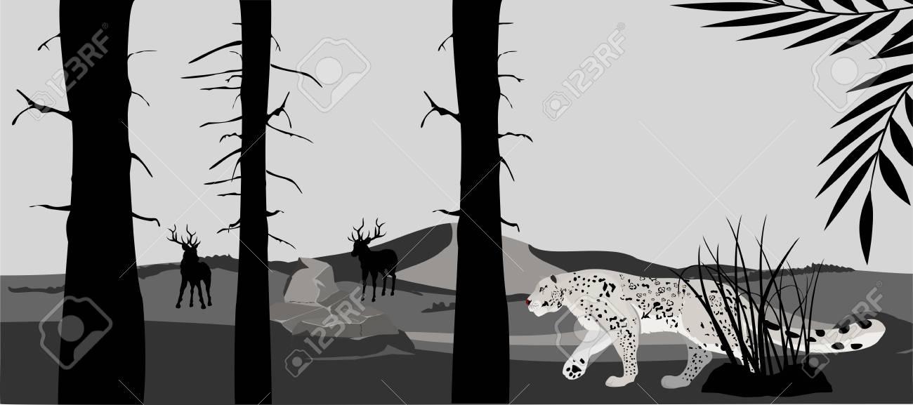 Silueta Monocromática Del Leopardo De Las Nieves Caminando En El ...