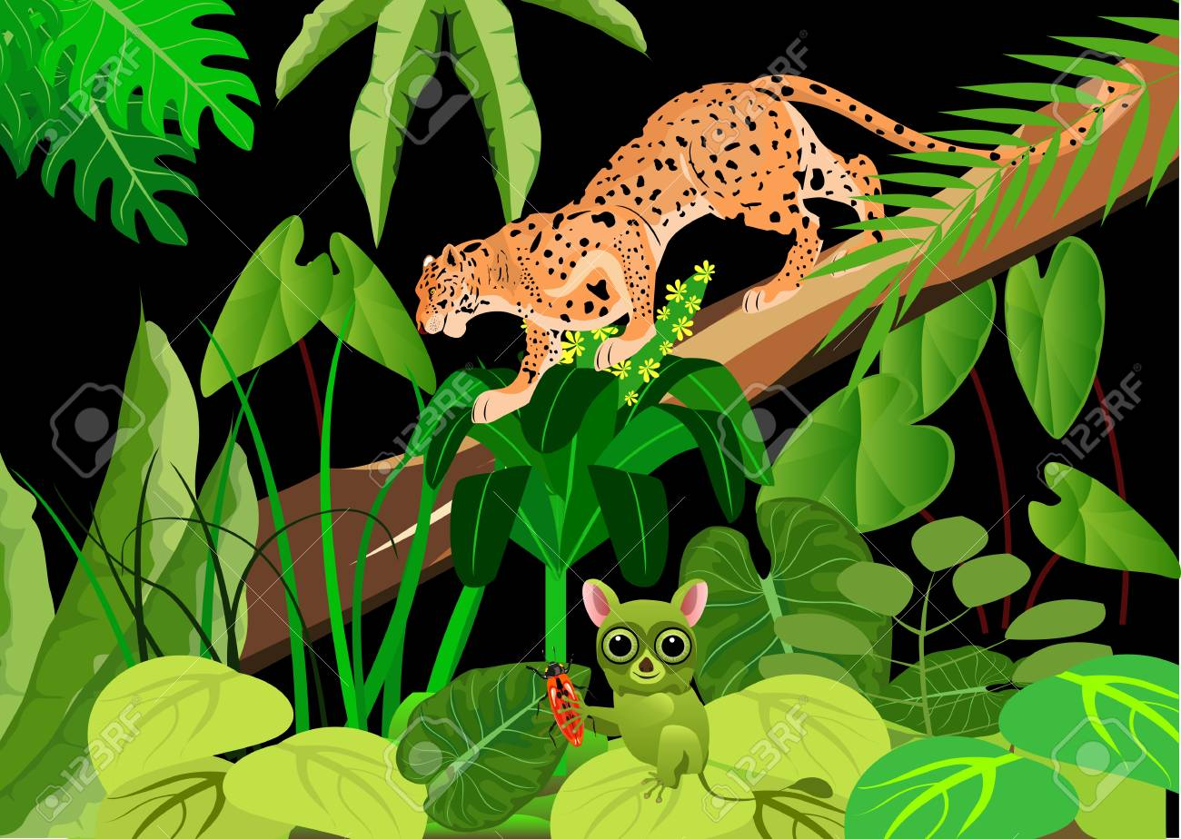 leopard and tarsier in the night jungle wildlife theme background