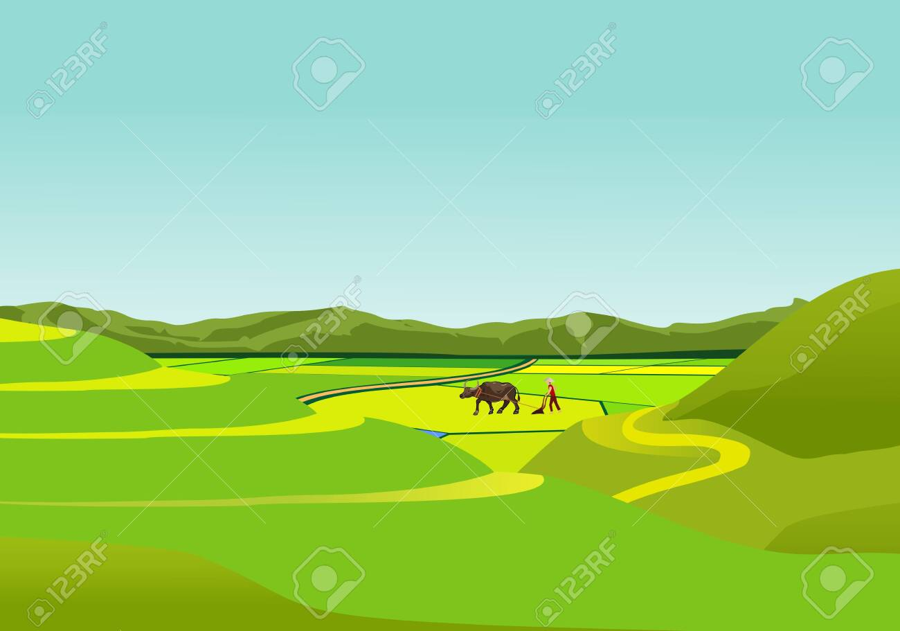 China countryside landscape, farmer with bull in the field vector - 121468620