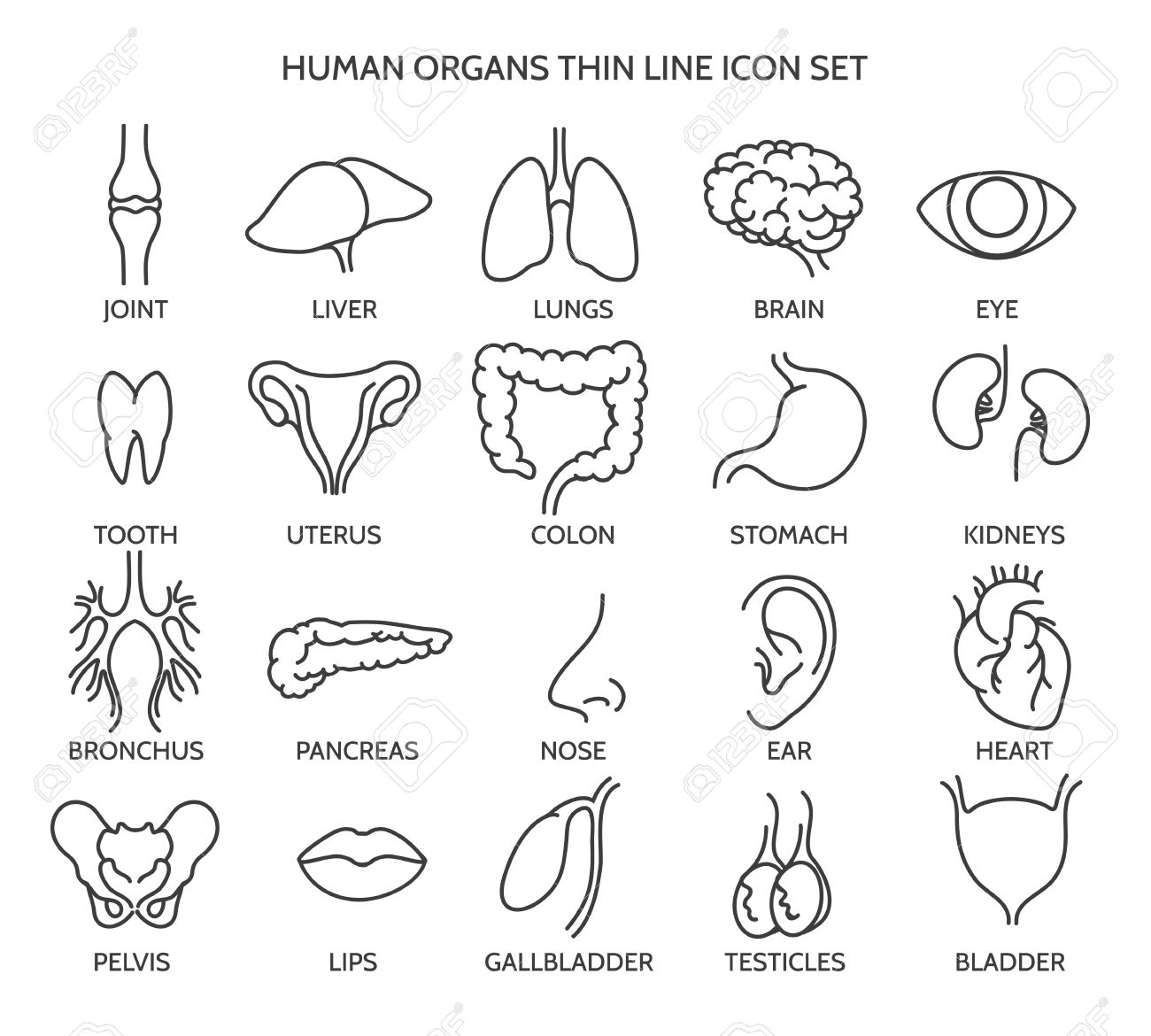 Organ line icons. Human organ signs or human body parts symbols. Tooth and brain line icons, eye and liver symbols. Vector illustration - 54352489