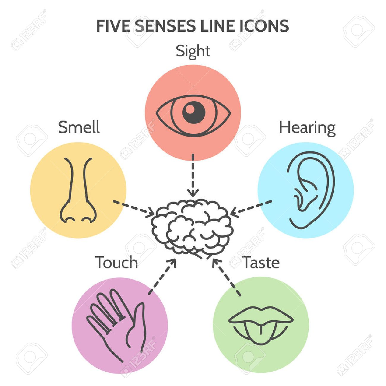 Five senses diagram electrical work wiring diagram five senses line icons human ear and eye symbols nose and mouth rh 123rf com diagram of five senses brain senses ccuart Image collections