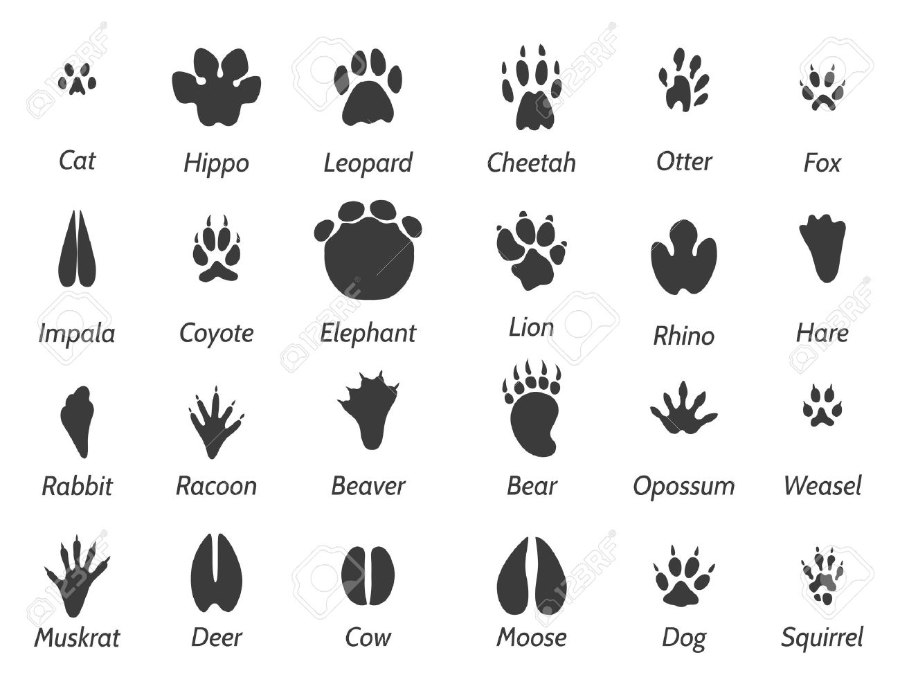 Wildlife animals black footprints set on white background with signs. Vector icons set - 58607271
