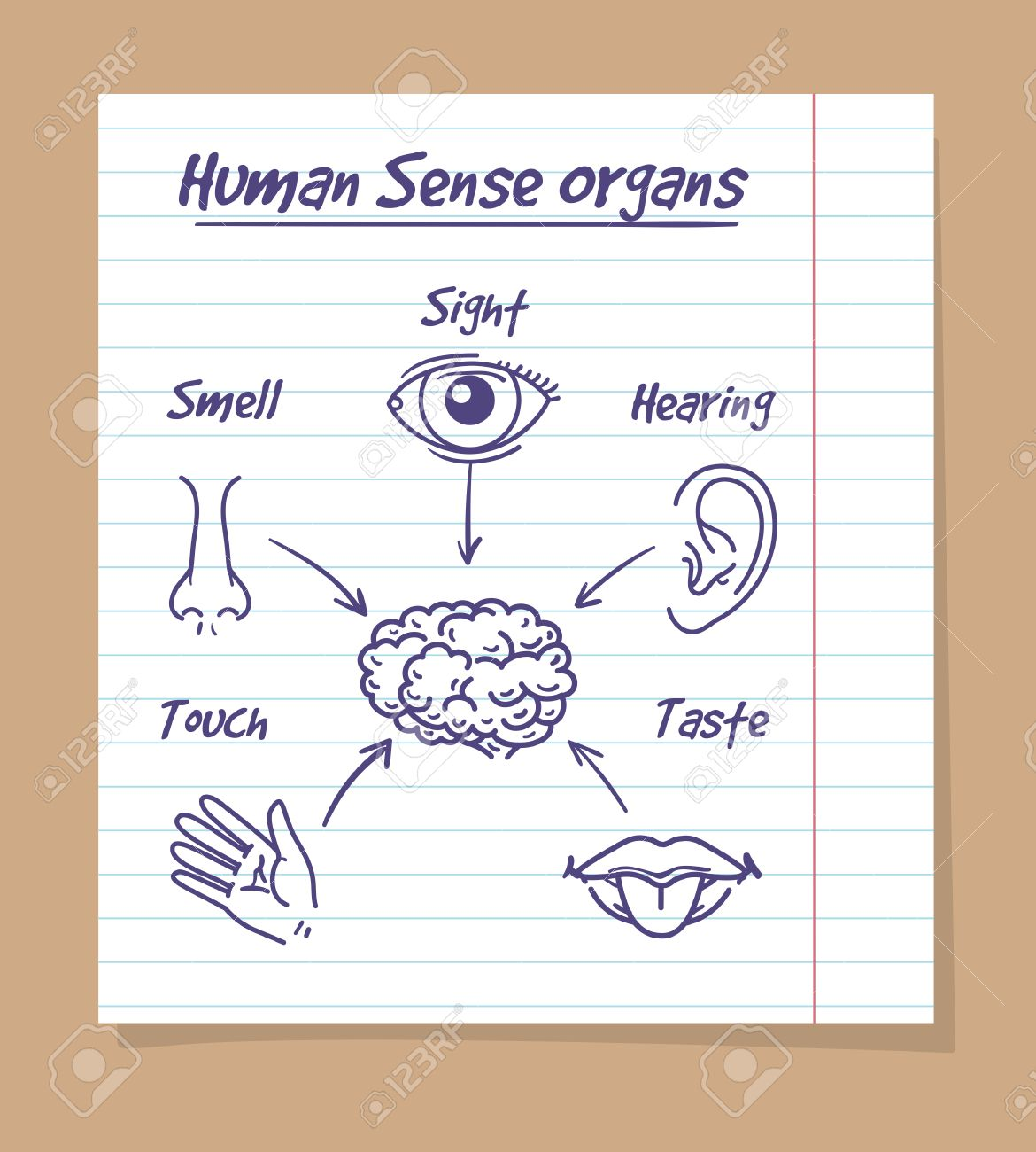 Five Senses Sketch. Human Eye, Nose And Ear, Smell And Taste ...