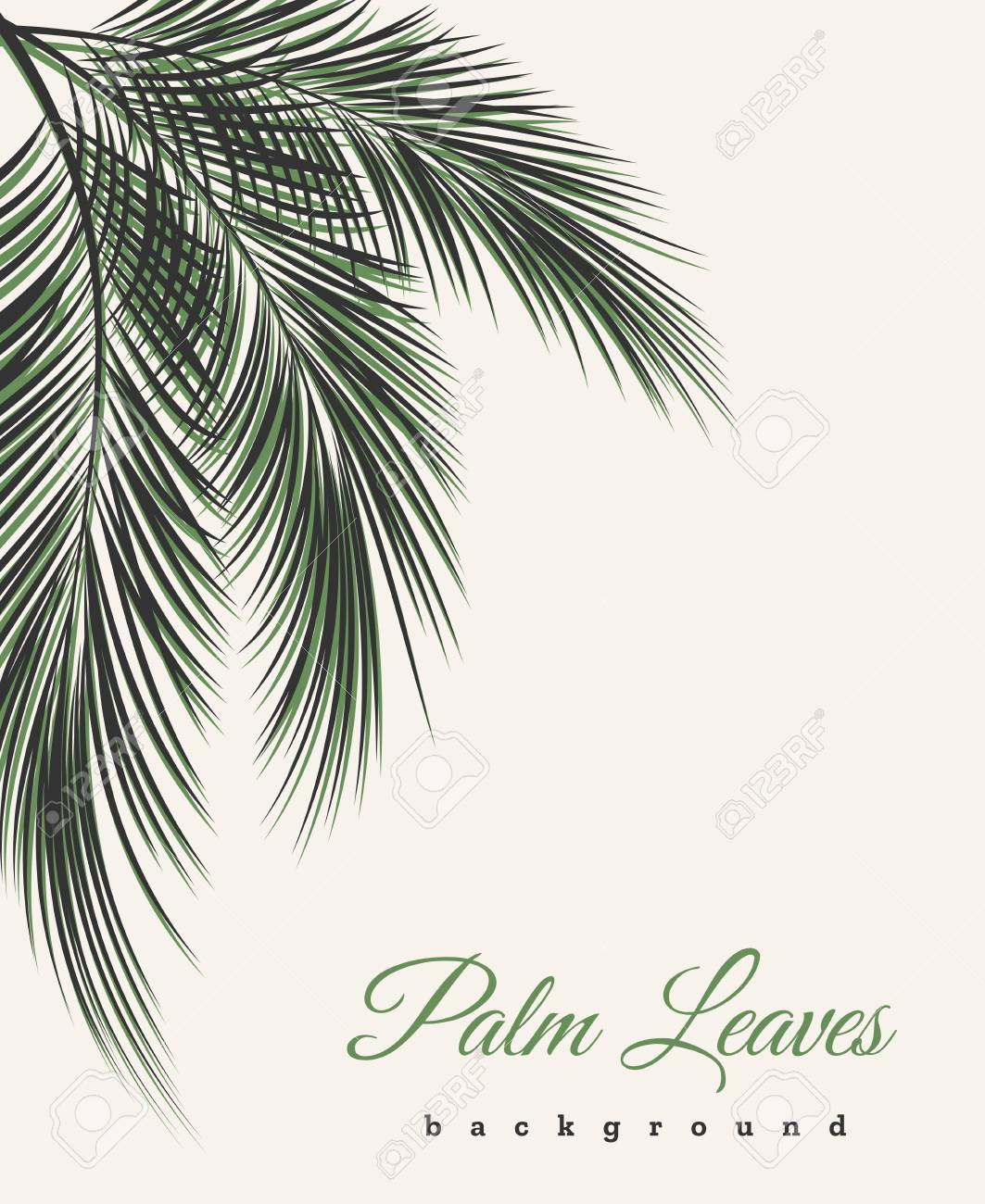Palm Leaves Vintage Background Tree Leaf Feathers Pattern Vector African Or Brazilian Wallpaper With