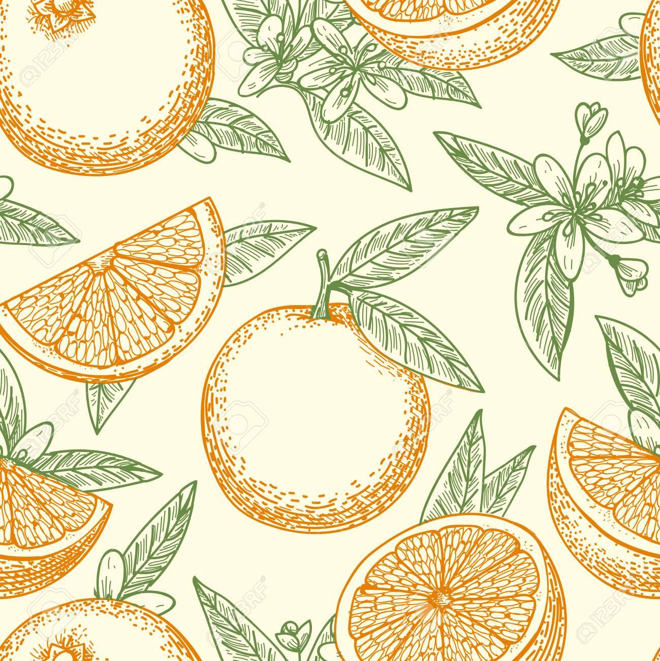 Patrón Dibujado Mano Naranja Fruta Naranjas Amarillas Hojas Verdes Y Flores Dibujo De Vector De Patrón De Fondo Transparente