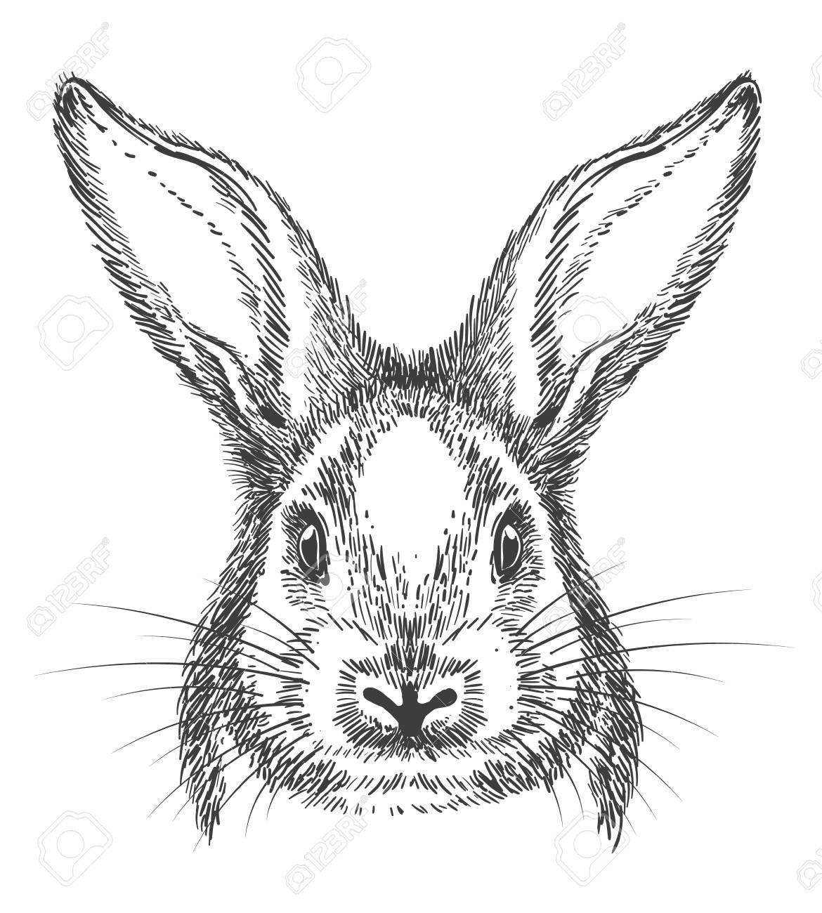 Bunny Drawing Vintage Hand Drawn Rabbit Face Vector Sketch