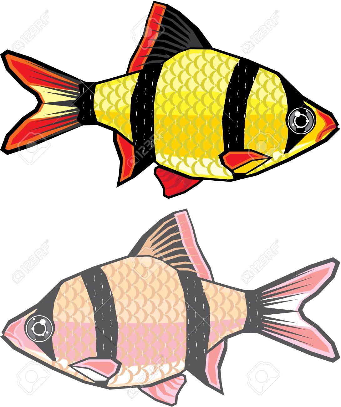 Barb Aquarium Fish Vector Image Royalty Free Cliparts Vectors And