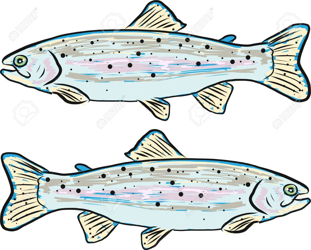 ニジマス ベクトル イラスト クリップ アート魚 ロイヤリティフリー