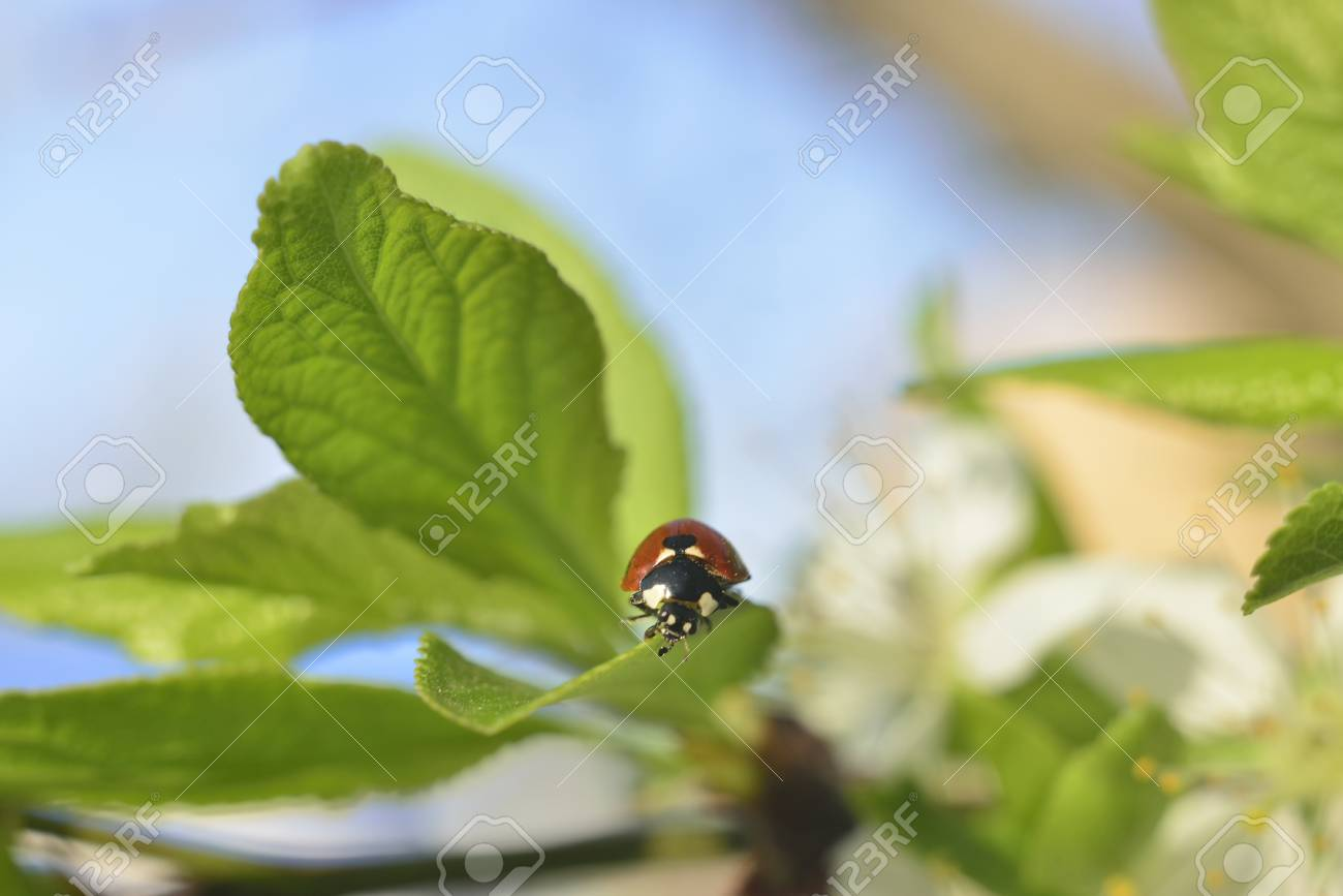spring background (sprouts on trees, green leaves, ladybug beetle ) - 54731135