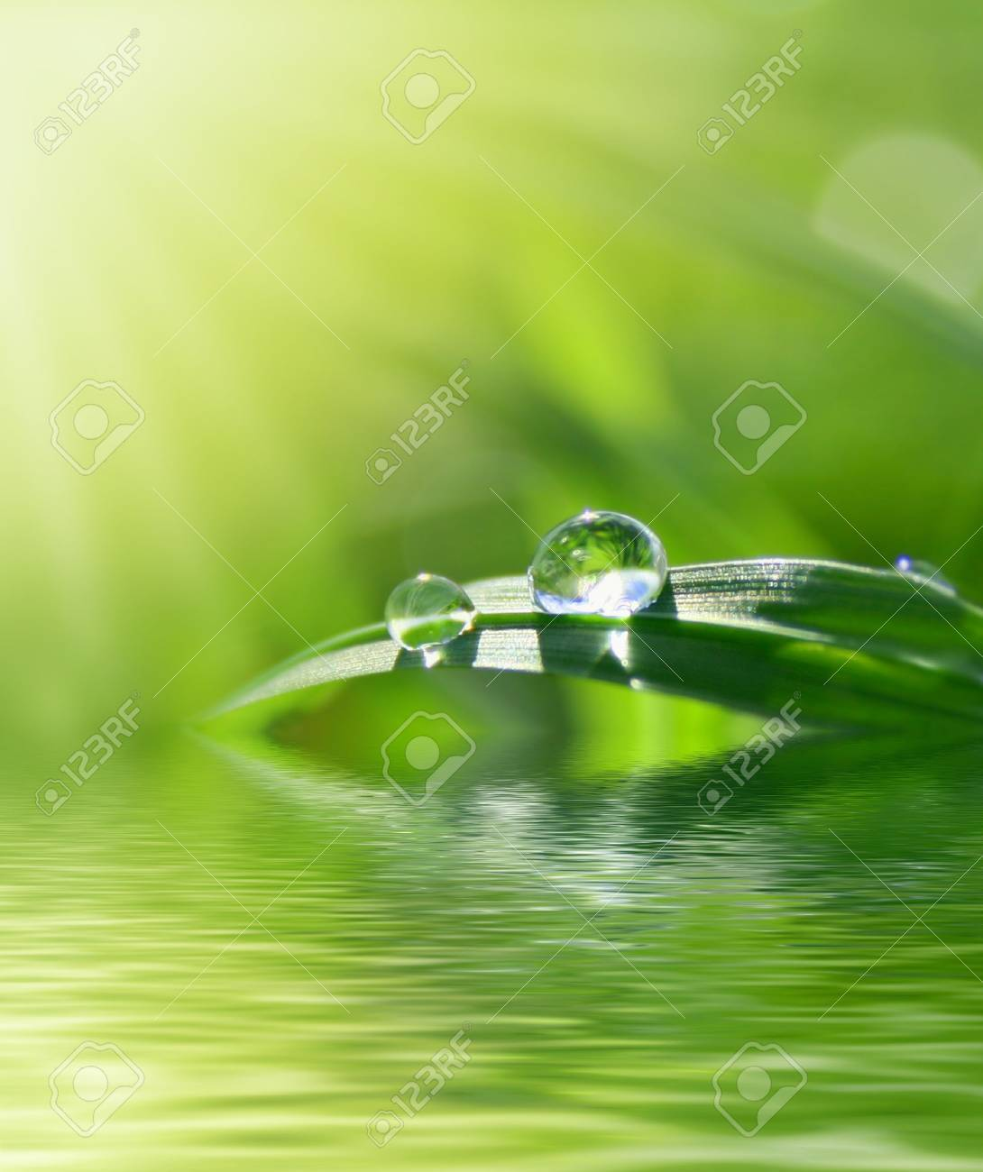 green grass with freshdrops Stock Photo - 4188369