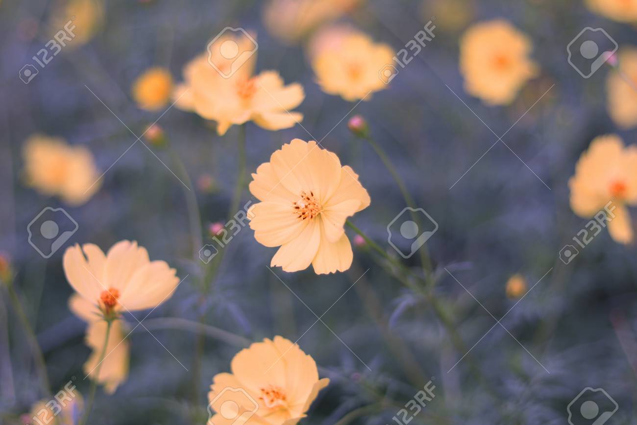 Flowers have a way to bring life to their surroundings and the flowers have a way to bring life to their surroundings and the more beautiful flowers we izmirmasajfo
