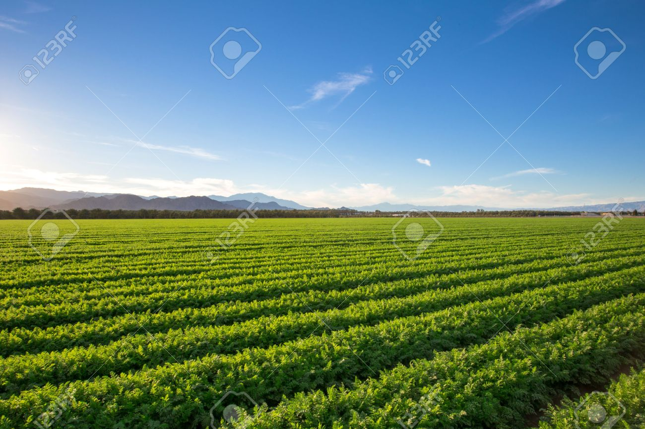 Organic Farm Land Crops In California Multiple layers of mountain view and fertile farm land in California. Lots of colors and clear skies. - 55407778