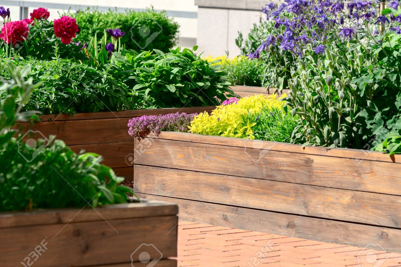 Raised Beds In An Urban Garden Growing Plants Herbs Spices And
