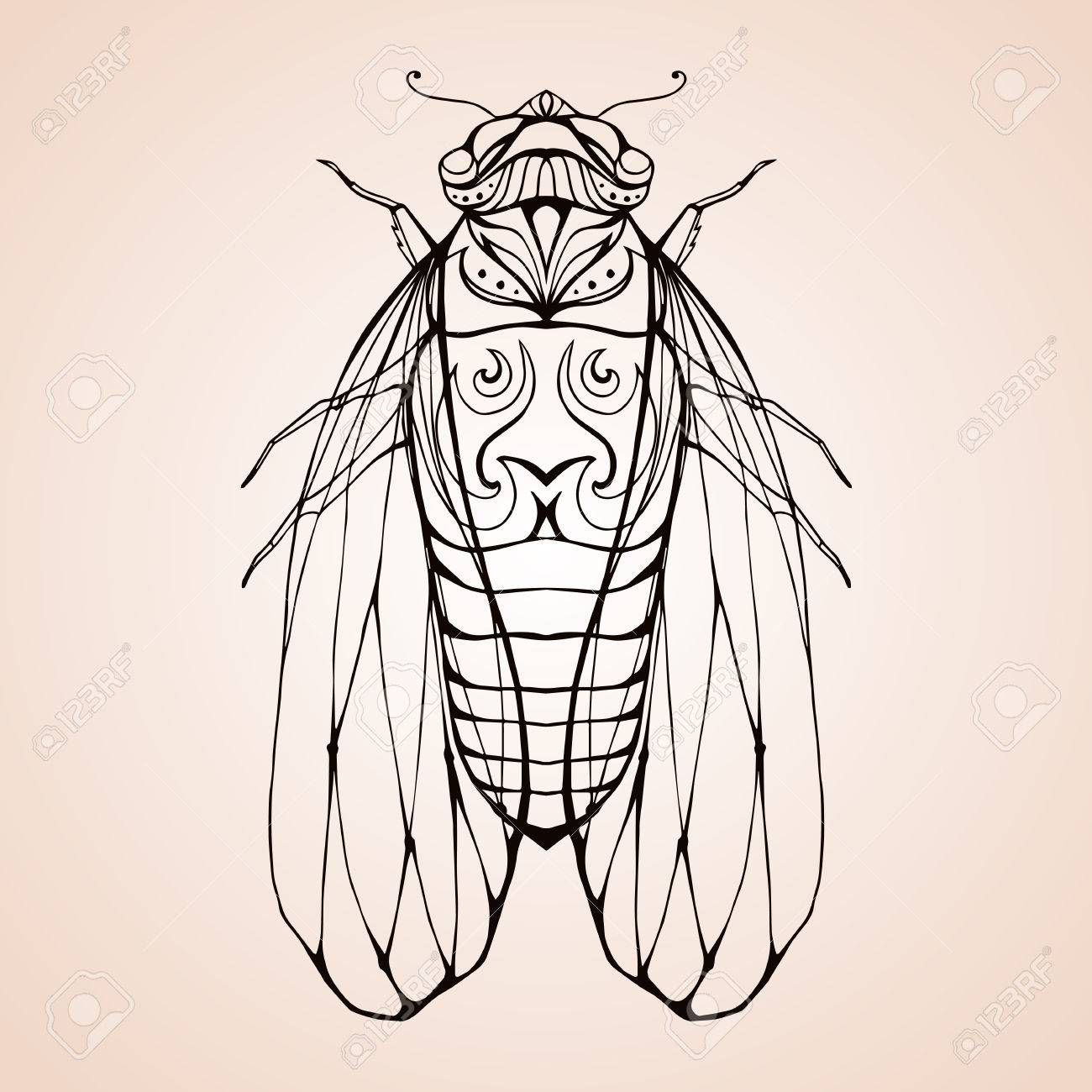 Illustration cicada with boho pattern. Vector element for coloring..