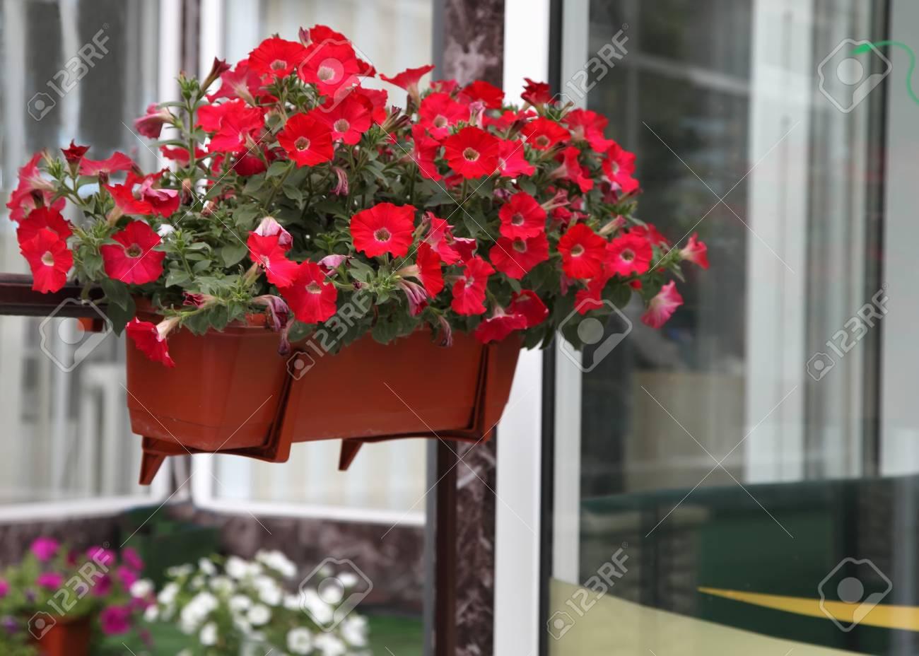 Terraza Flor Decorado De Una Casa