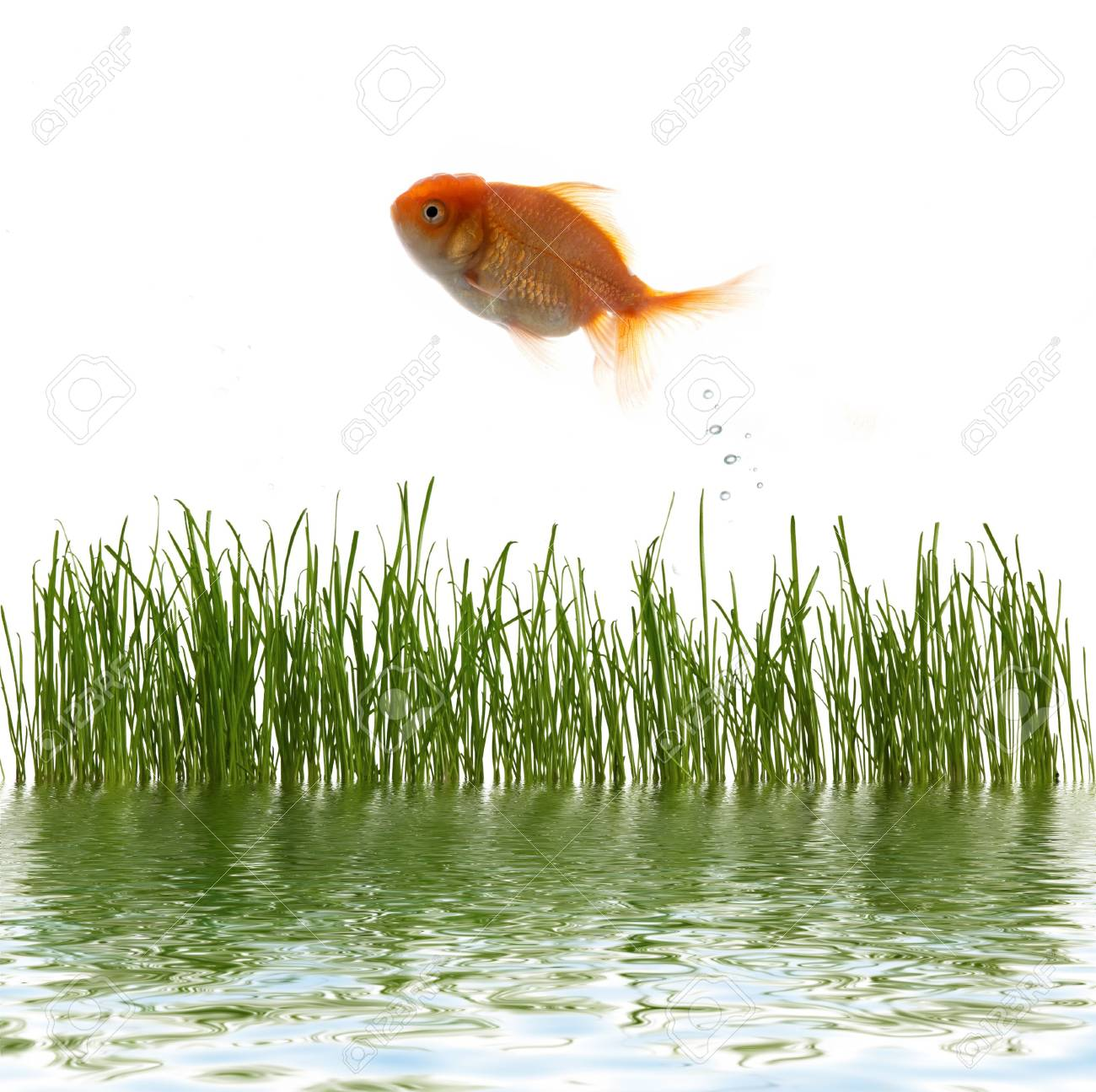 An image of fresh grass an goldfish Stock Photo - 3228434